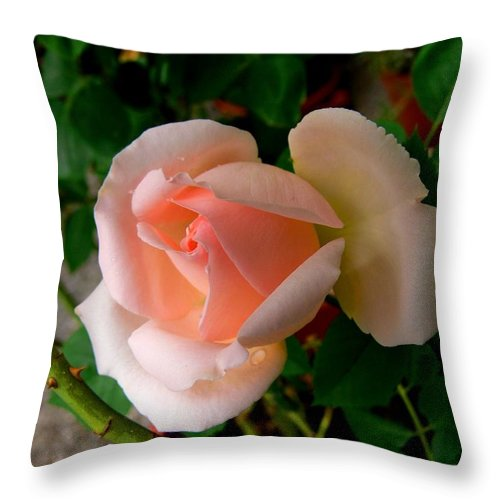 Pink Rose Throw Pillow featuring the photograph The Youth Of The Pink Rose by Helmut Rottler