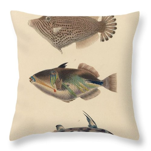 The Zoology Of Captain Beechey's Voyage 1825 - Monocanthus Spilosoma + Balistes Aculeatus + Callorhynchus Smythii Throw Pillow featuring the painting The Zoology Of Captain Beechey's Voyage by MotionAge Designs