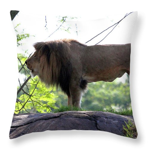 Animal Throw Pillow featuring the photograph Theres Nothing Like A Good Roar To Start The Morning by Mary Haber
