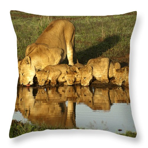 Lion Throw Pillow featuring the photograph Thirsty Lions by Michele Burgess