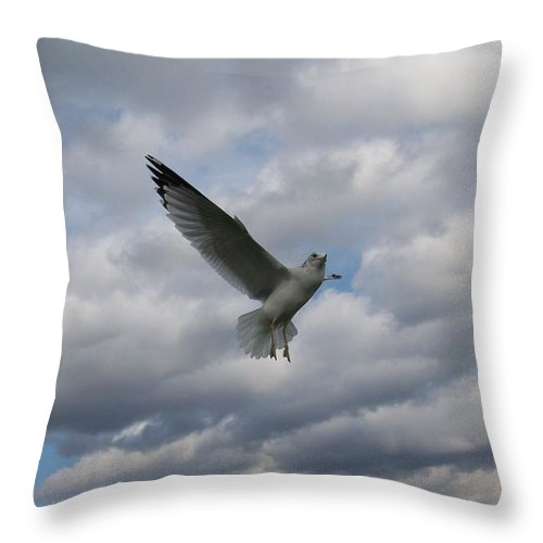 Gull Throw Pillow featuring the photograph This Is Fun by Jackie Mueller-Jones