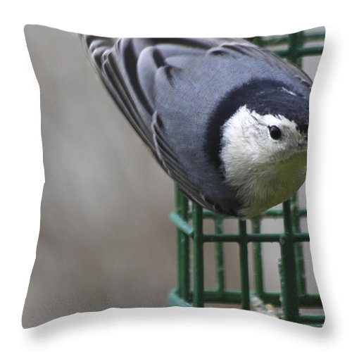 Bird Throw Pillow featuring the photograph This Is My Suet by Deborah Benoit