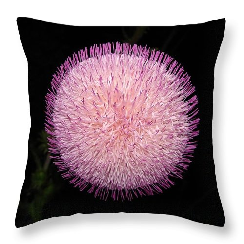 Bloom Throw Pillow featuring the photograph Thistle Bloom At Night by J R Seymour