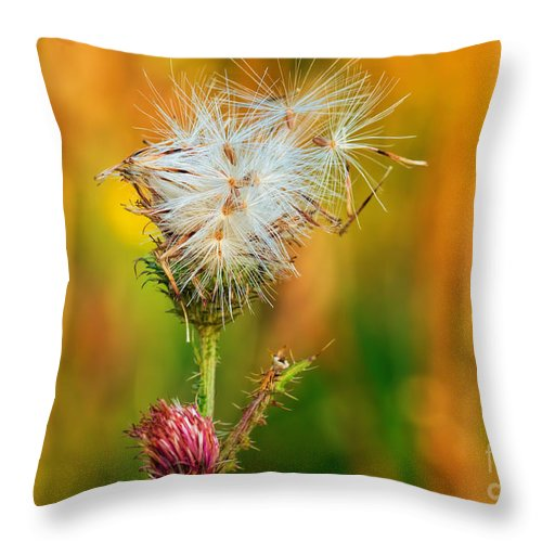 Bloom Throw Pillow featuring the photograph Thistle Seeds by Les Palenik