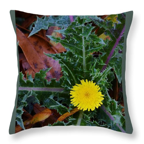 Thistle This Throw Pillow featuring the photograph Thistle This by Warren Thompson