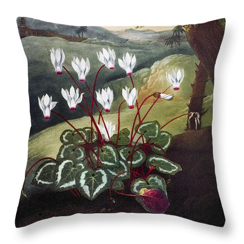 1804 Throw Pillow featuring the photograph Thornton: Cyclamen by Granger