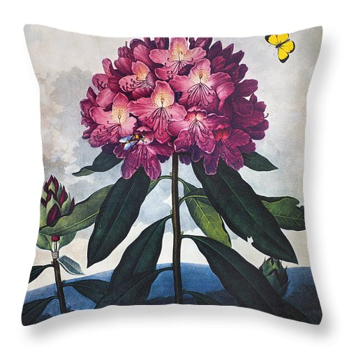 1802 Throw Pillow featuring the photograph Thornton: Rhododendron by Granger