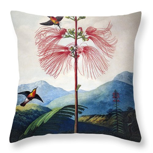 1799 Throw Pillow featuring the photograph Thornton: Sensitive Plant by Granger