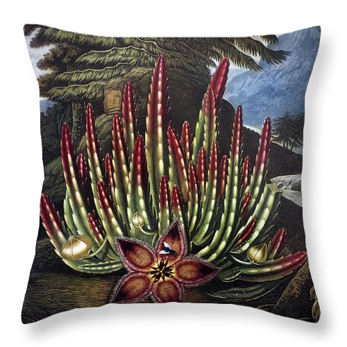 1801 Throw Pillow featuring the photograph Thornton: Stapelia by Granger