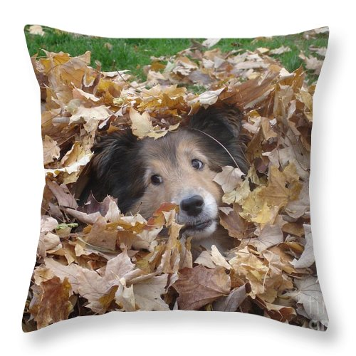 Dog Throw Pillow featuring the photograph Those Eyes by Shelley Jones