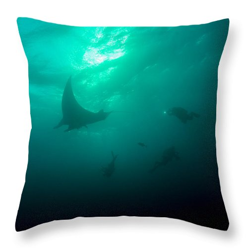 Manta Ray Throw Pillow featuring the photograph Three Divers And A Manta by Brent Barnes