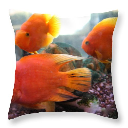 Orange Throw Pillow featuring the photograph Three Fish by Kenna Westerman