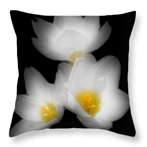 Flower Throw Pillow featuring the photograph Three Flowers by Kenneth Krolikowski