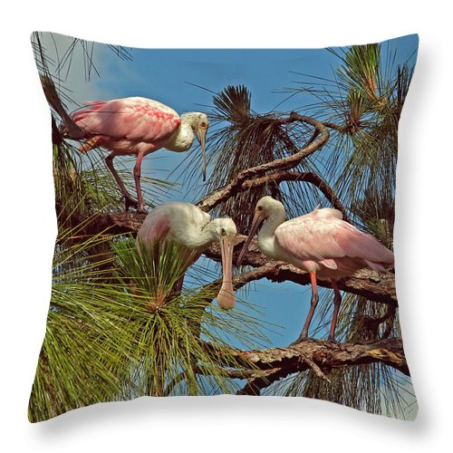 Nature Throw Pillow featuring the photograph Three In A Tree by Peg Urban