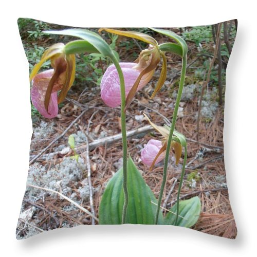 Lady Slipper Throw Pillow featuring the photograph Three Lady Slippers by Modern Art