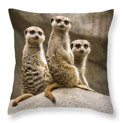 Chad Davis Throw Pillow featuring the photograph Three Meerkats by Chad Davis