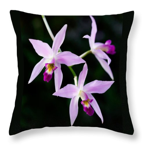 Orchid Throw Pillow featuring the photograph Three Orchids by Marilyn Hunt