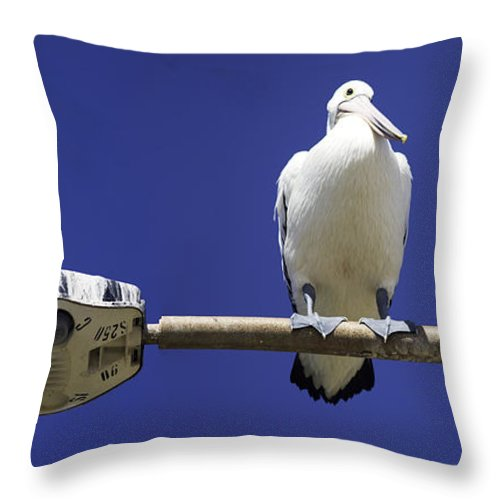 Australian White Pelicans Throw Pillow featuring the photograph Three Pelicans On A Lamp Post by Avalon Fine Art Photography