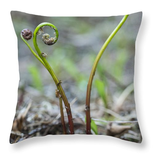 Canada. Throw Pillow featuring the photograph Three Tiny Ferns by Julie DeRoche