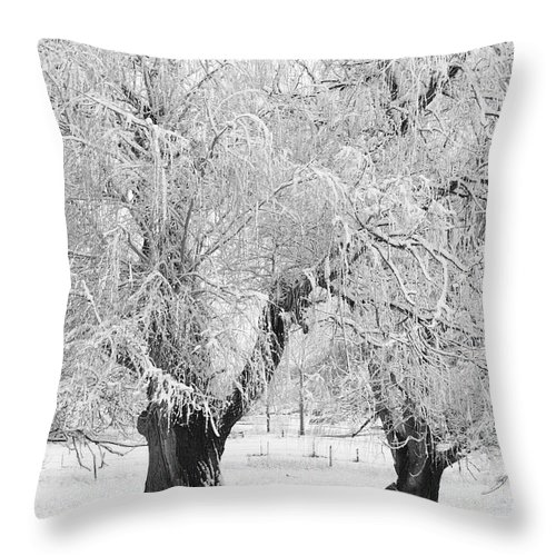 Black And White Throw Pillow featuring the photograph Three Trees In The Snow - Bw Fine Art Photography Print by James BO Insogna