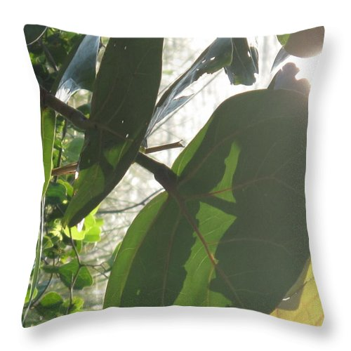 Sea Throw Pillow featuring the photograph Through The Sea Grape Leaves by Ian MacDonald