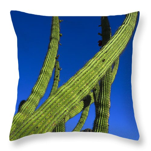 Tickle Me Throw Pillow featuring the photograph Tickle Me by Skip Hunt