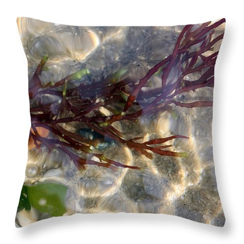 Seaweed Throw Pillow featuring the photograph Tidepool Seaweed by Mary Haber
