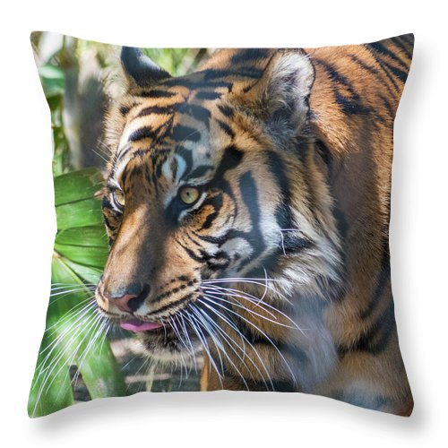 Tiger Throw Pillow featuring the photograph Tiger by Andrew Lelea