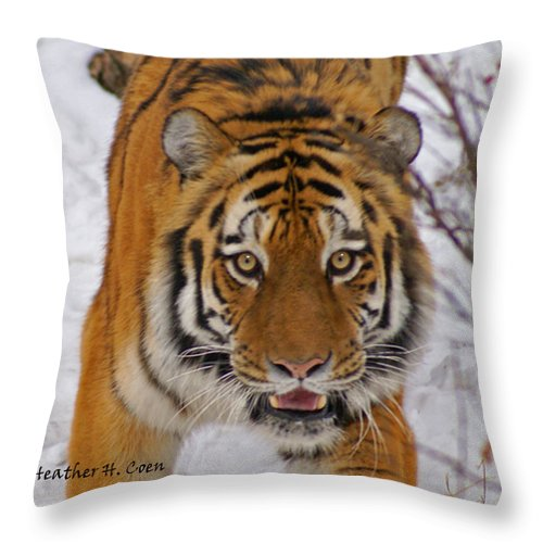 Tiger Throw Pillow featuring the photograph Tiger by Heather Coen