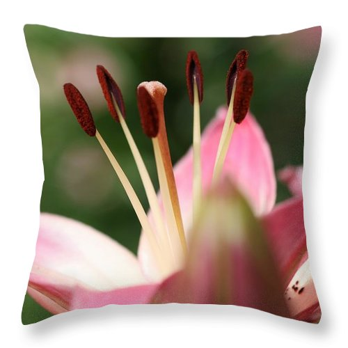 Tiger Lilly Throw Pillow featuring the photograph Tiger Lilly by Kristina Jones