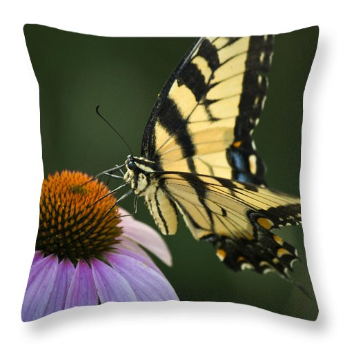 Butterfly Throw Pillow featuring the photograph Tiger Swallowtail 1 by Teresa Mucha