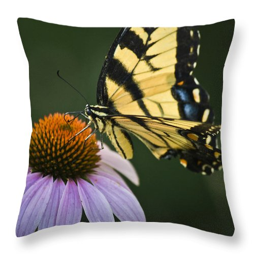 Garden Throw Pillow featuring the photograph Tiger Swallowtail 2 by Teresa Mucha