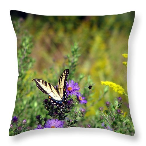 Tiger Swallowtail Throw Pillow featuring the photograph Tiger Swallowtail And Bee by George Jones