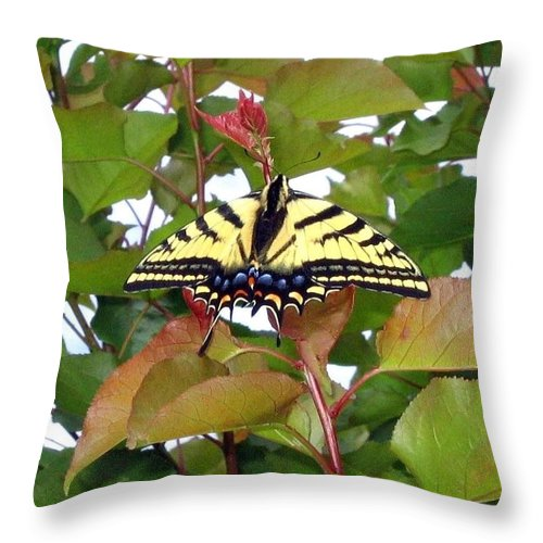 Butterfly Throw Pillow featuring the photograph Tiger Swallowtail Butterfly by Will Borden