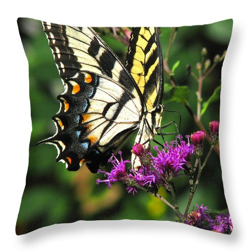 Nature Throw Pillow featuring the photograph Tiger Swallowtail by Peg Urban