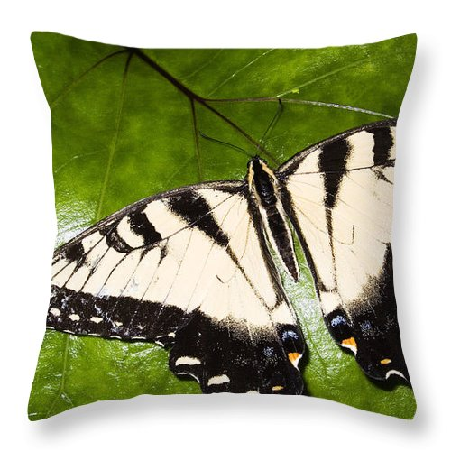Eastern Tiger Swallowtail Butterfly Throw Pillow featuring the photograph Tiger Swallowtail by Thomas R Fletcher