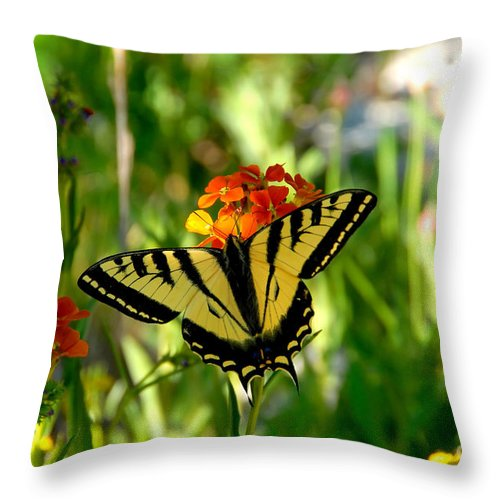 Tiger Tail Butterfly Throw Pillow featuring the photograph Tiger Tail Beauty by David Lee Thompson