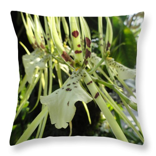 Orchid Throw Pillow featuring the photograph Tiger Tongue by Trish Hale