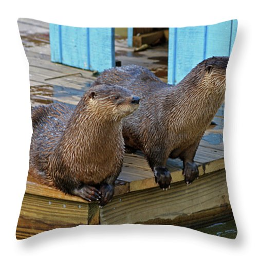 Otter Throw Pillow featuring the photograph Time For Lunch by Cathi Abbiss Crane