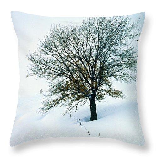 Tree Throw Pillow featuring the photograph Time Will Tell by Bruce Thompson