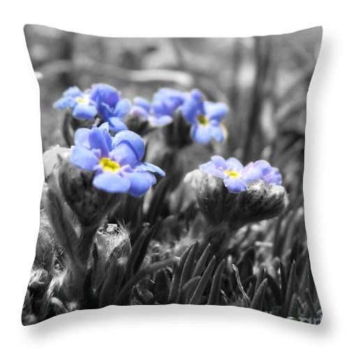 Flowers Throw Pillow featuring the photograph Tiny Gems by Amanda Barcon