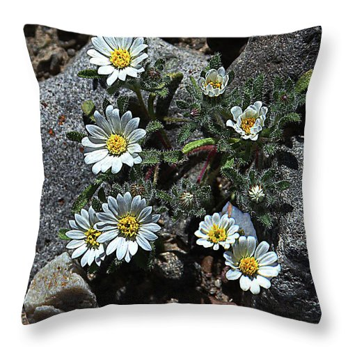 Tiny White Flowers In The Gravel Throw Pillow featuring the digital art Tiny White Flowers In The Gravel by Tom Janca