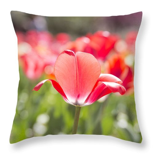 Tulips Throw Pillow featuring the photograph Tipsy by Jennifer Schaefer