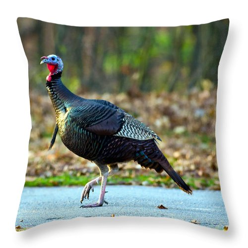 Mclean County Throw Pillow featuring the photograph Tiptoe Turkey Trot by Alan Look