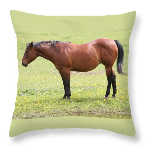 Horse Throw Pillow featuring the photograph Tired Horse by Tiffany Vest