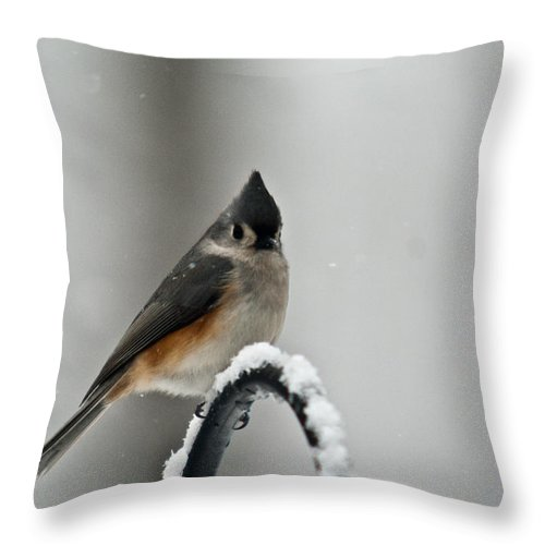 Tufted Throw Pillow featuring the photograph Titmose On Arch by Douglas Barnett