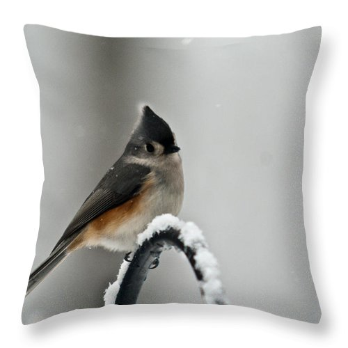 Titmouse Throw Pillow featuring the photograph Titmouse In The Snow by Douglas Barnett