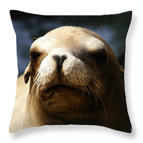Eared Seal Throw Pillow featuring the photograph To Bask In Royal Sun by Linda Shafer