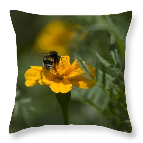 Yellow Throw Pillow featuring the photograph To Be Or Not To Bee by Adrian Bud