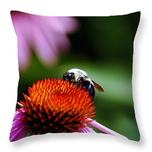 Clay Throw Pillow featuring the photograph To Bee Or Not To Bee by Clayton Bruster